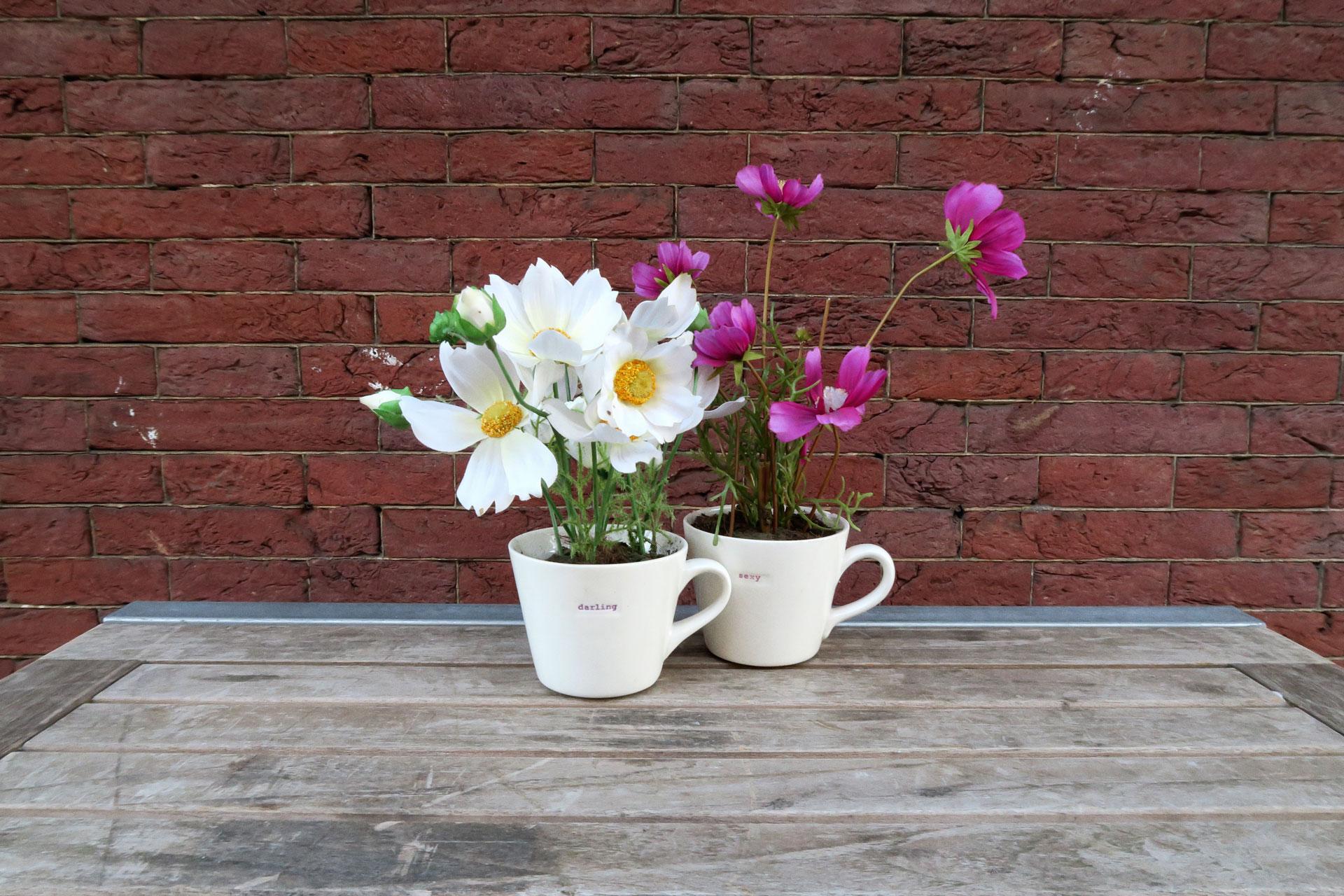 flower-amsterdam-denisasimam